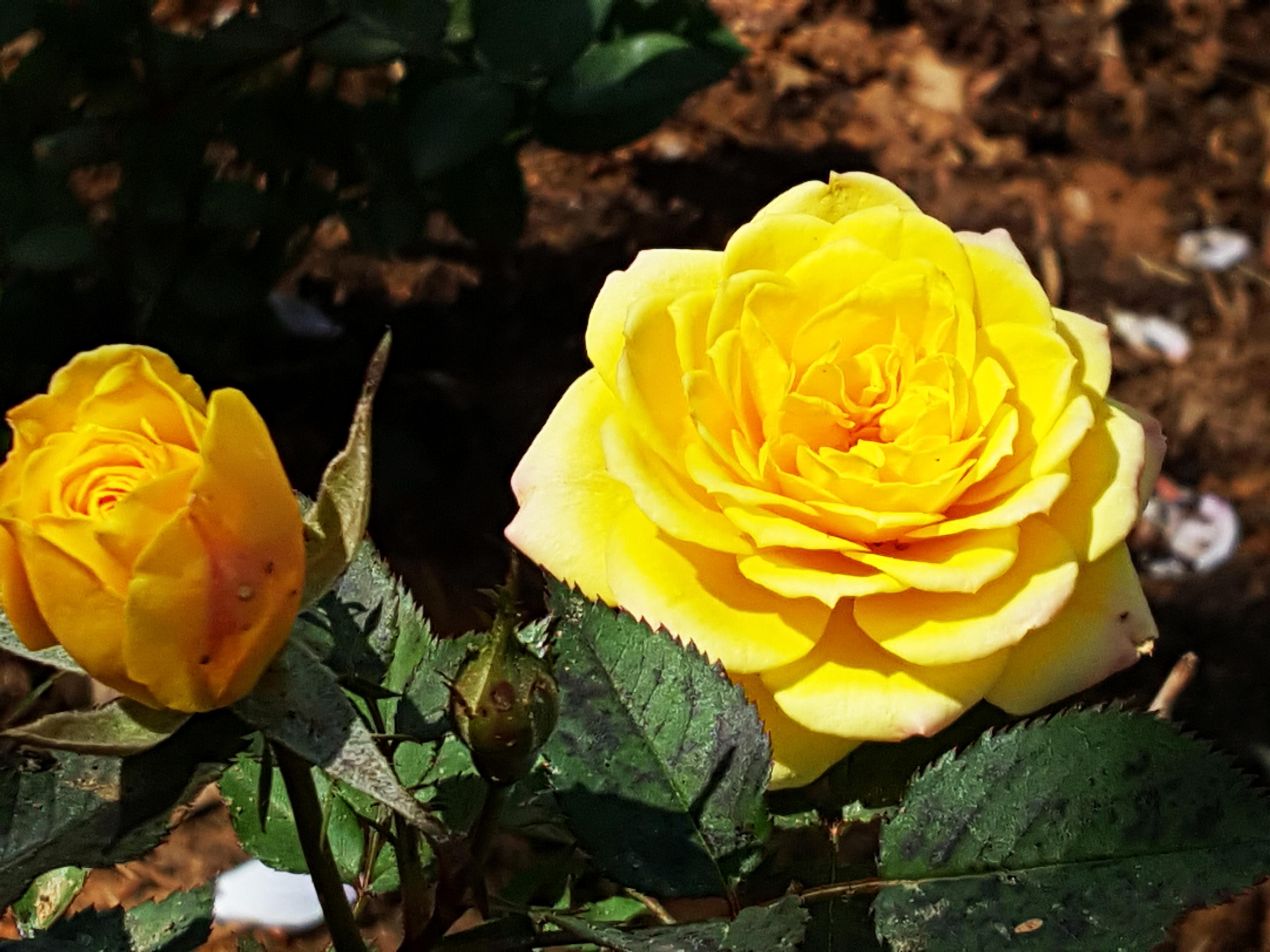얼마전 길을 지나다 살짝 셧터를 누르고 보니 꽃 봉우리가 예뻐 올려봅니다.